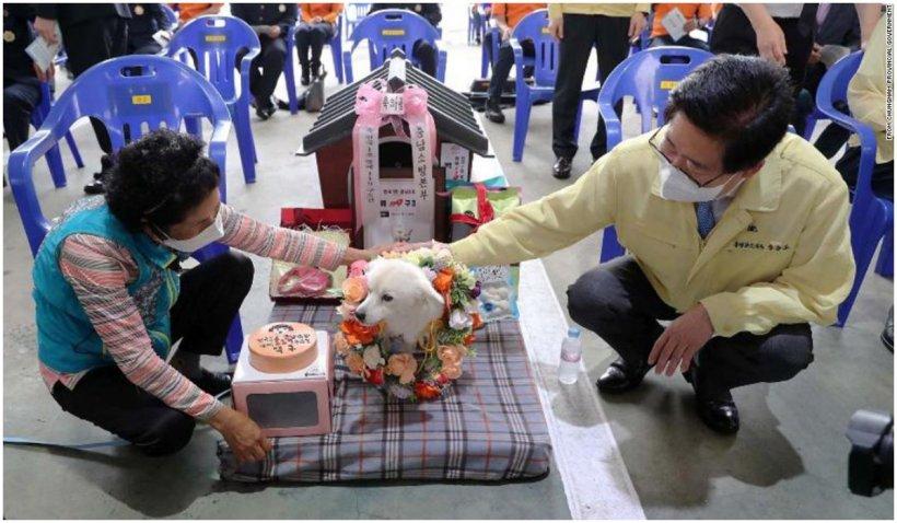 """Un câine care i-a salvat viața stăpânului a primit titlul onorific de """"Câine salvator"""" în Coreea de Sud"""