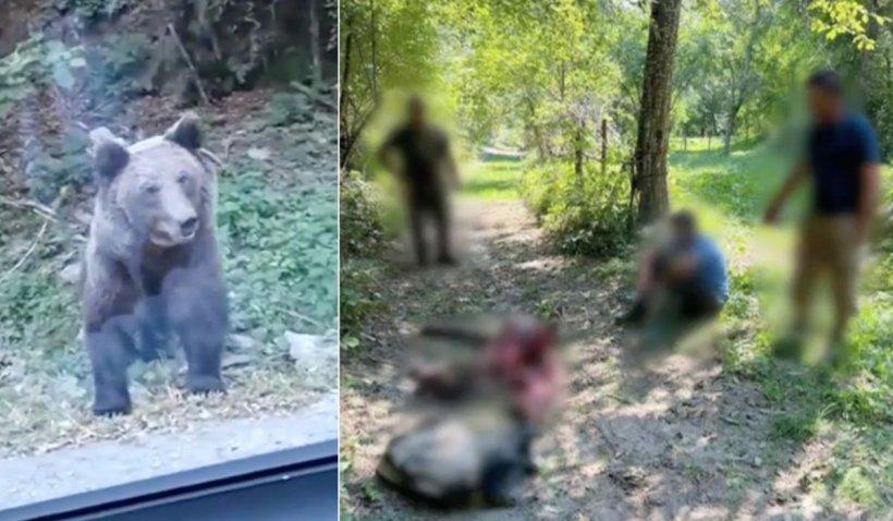 Un urs s-a chinuit 10 ore, după ce s-a prins într-un laţ în comuna Ceahlău din Neamţ şi nimeni nu a intervenit să îl ajute