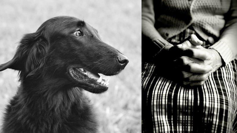 Bunicuță din Lupeni salvată de câinele ei, după ce s-a accidentat în pădure. Patrupedul a vegheat-o toată noaptea și a avertizat echipa de căutare