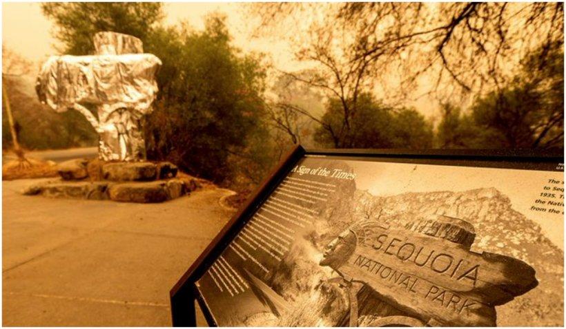 Cel mai mare copac din lume a fost învelit în folie termoizolantă pentru a fi protejat de incendiile care fac ravagii în California