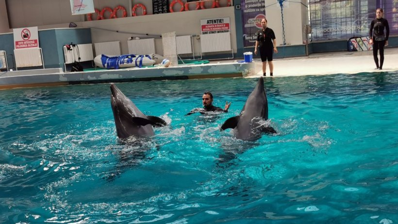 Delfinul Chen-Chen, suspect de coronavirus. Spectacolele de la Delfinariul din Constanţa au fost suspendate