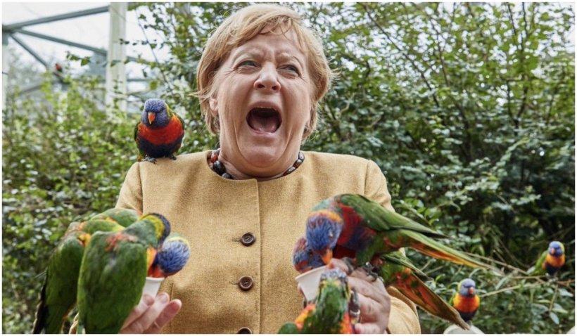 """Angela Merkel a fost """"atacată"""" în timp ce hrănea păsările în parc"""