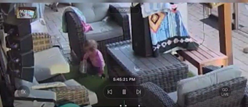 Un tată a fost șocat să descopere că fiica lui de 18 luni se juca cu o tarantulă