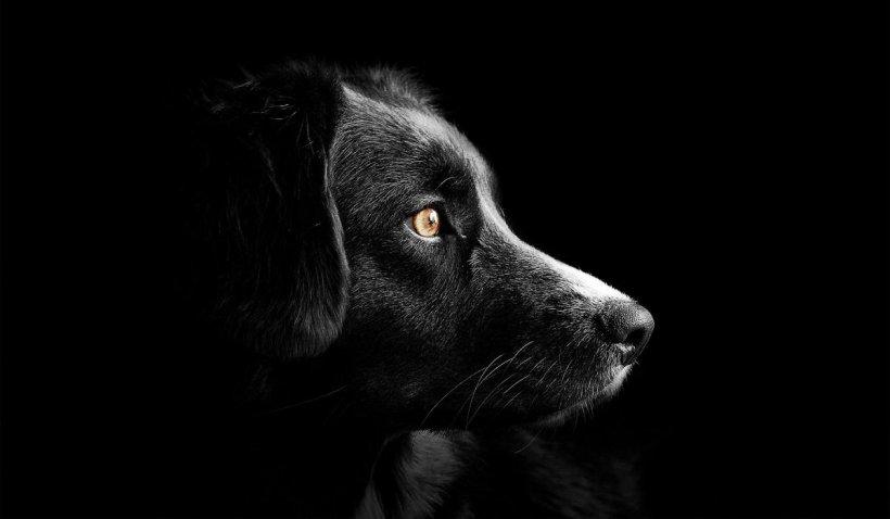 Zgomotul câinilor l-a costat pe un brăilean câteva sute de lei. Vecinii nu au mai suportat și au sesizat poliția