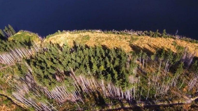 Pădurile, în mâna mafiei. Cum se foloseşte lemnul în campania electorală