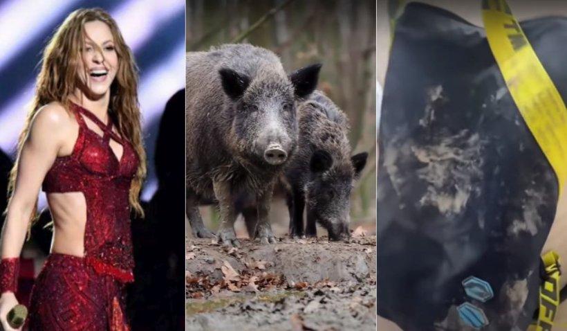 Shakira, atacată de doi porci în Barcelona. Vedeta și-a spus versiunea sa pe rețelele sociale