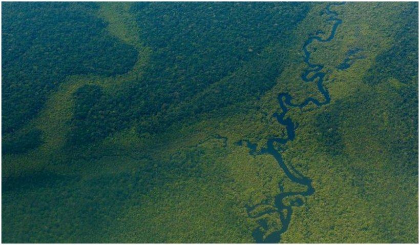 Facebook interzice vânzarea terenurilor protejate din pădurea amazoniană pe Marketplace