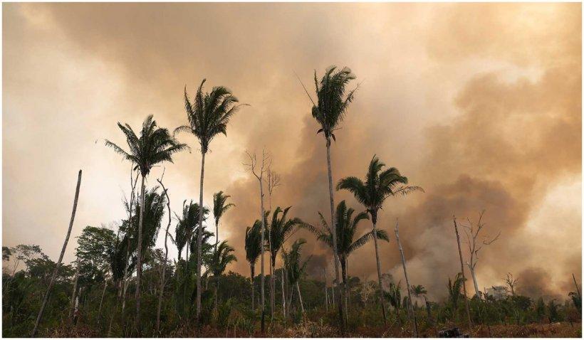 Incendiile ilegale fac scrum Pădurea Amazoniană. Flăcările sunt atât de puternice încât și pământul este carbonizat