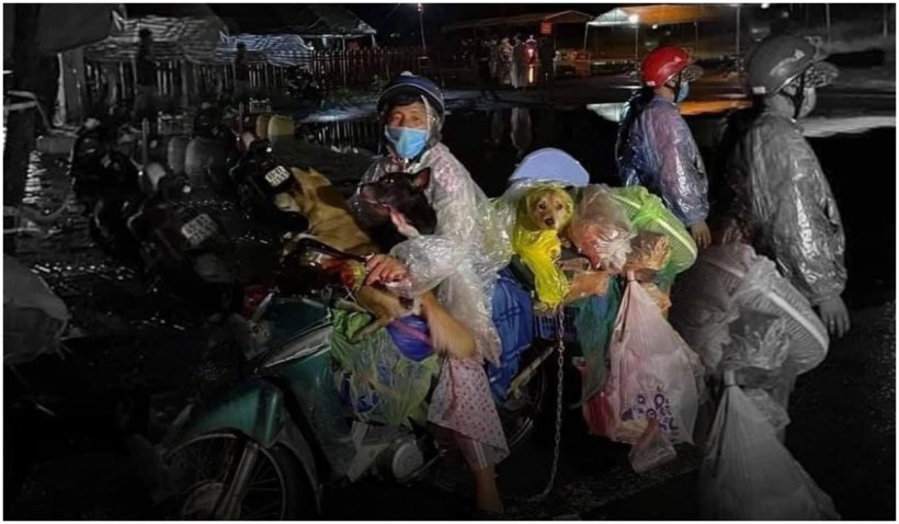Furie în Vietnam după ce 13 câini au fost uciși din cauză că stăpânii lor avea COVID-19