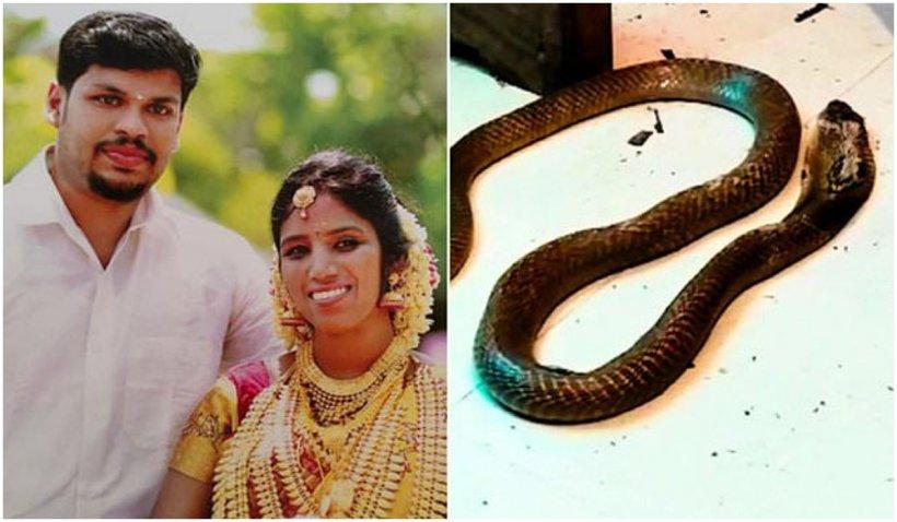 Un bărbat din India și-a ucis soția bogată cu o cobră, după ce nu a reușit să o omoare cu o viperă