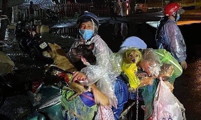 Furie generală în Vietnam: 12 câini au fost uciși după ce stăpânii lor s-au infectat cu COVID-19