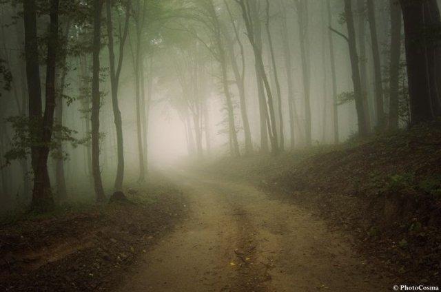Pădurile ireale ale României. Frumuseţile naturale ale ţării noastre uimesc internetul