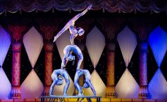 Draft decision to ban animal performances at Bucharest 'Globus' Circus & Variety Company