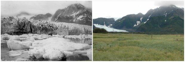Gheţarul Pedersen, Alaska. Vara, 1917 — vara, 2005