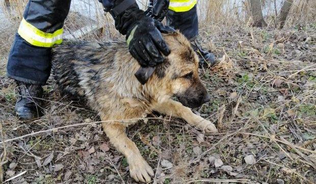 Câine salvat de la moarte de pompieri dintr-un lac îngheţat în Cisnădie