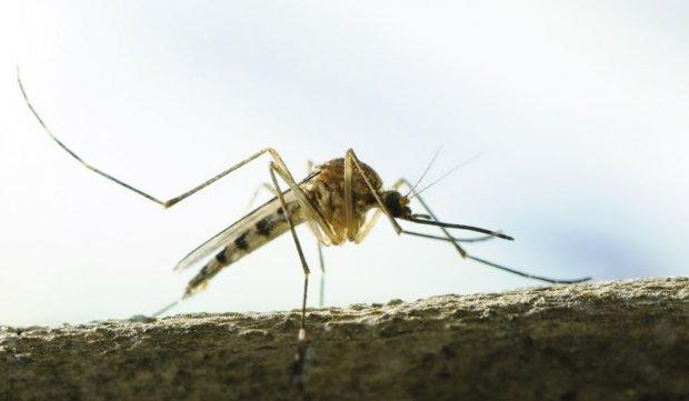 Cele mai simple metode pentru a scăpa de ţânţari