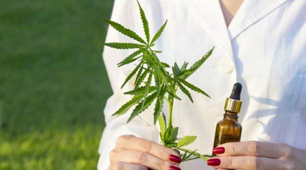Tratamentul cu ulei de canabis, recomandat de medicii din intreaga lume!
