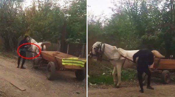 Un bărbat din Buzău şi-a bătut calul cu drujba pornită, apoi l-a lovit cu pumnii şi picioarele. Prins de poliţişti, şi-a cerut scuze