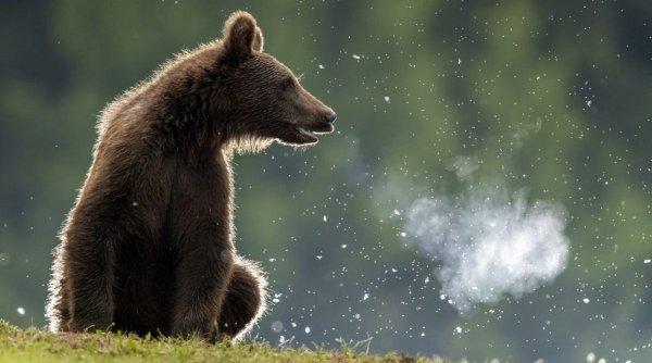 Autoritățile au emis mesajul RO-ALERT! O ursoaică a fost zărită într-un parc din Târgu-Mureş