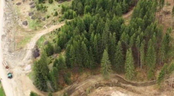 Pădurea, în mâna mafiei. Un post de pădurar costă și 40.000 de euro