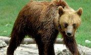 Un urs a stat mai bine de 12 ore prins �n GARDUL unei gradini din judetul D�mbovita