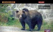 Un urs a ramas blocat �n gardul unei scoli din judetul D�mbovita