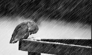 Atentionare meteo. Weekendul vine cu ploi, v�nt si ninsoare