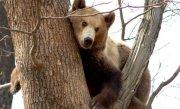 Ursii si lupii din Rom�nia, atractia turistilor germani