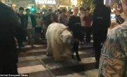 Apariţie şoc la metroul londonez. Un urs polar de doi metri s-a plimbat nestingherit printre călători