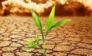 Un concept revoluţionar, cu beneficii majore pentru mediul înconjurător. Fotosinteza artificială, obţinută cu ajutorul unui sistem inventat în SUA