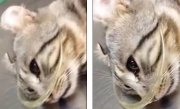 Momentul emoţionant când o pisică plânge, după ce a fost salvată - VIDEO