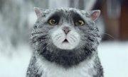 O pisică transformă Crăciunul într-o catastrofă. Vezi cea mai frumoasă reclamă de sărbători - VIDEO