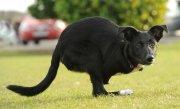 """Un câine din România care """"se crede cangur"""" a ajuns vedetă în presa străină"""