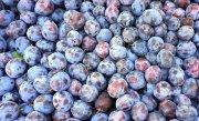 Un bărbat din Vâlcea a murit după ce a căzut într-un butoi cu prune puse la fermentat