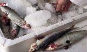 Marile lanțuri de magazine din București, pline de pește stricat. Ce nereguli s-au descoperit