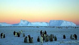 """Ce au găsit SUB gheaţa din Antarctica. """"Acum este în cel mai puţin vizitat muzeu din lume"""""""