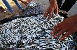 Aproximativ 4.000 de pescari, BLOCAŢI pe mai multe insule indoneziene