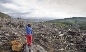 În Premieră: Jaful din păduri! Cum este România vândută bucată cu bucată