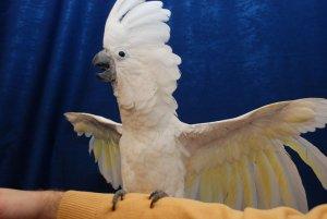 Cel mai încăpăţânat papagal din lume! Vezi cum reuşeşte să îşi exaspereze stăpânul