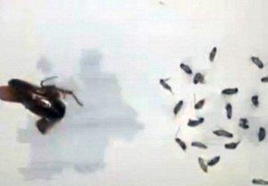 Un tânăr din China a descoperit că găzduieşte 25 de gândaci într-o ureche