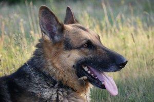 Câinele care are maşină de serviciu. Se întâmplă în România