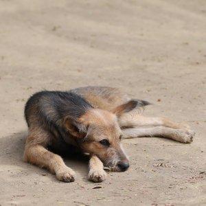 Sfâşiată de câini, chiar lângă un centru de plasament pentru copii