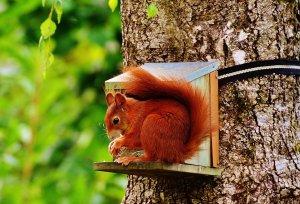 Dramă fără sfârşit! Se caută certificatele de naştere a veveriţelor din Bistriţa