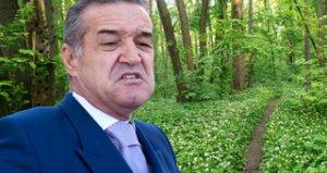 Gigi Becali, ghinionist in afaceri. A cumparat un teren de 10 hectare in padurea Baneasa, dar nu poate face nimic cu el dintr-un motiv supertare