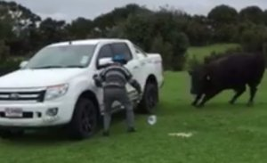 Scene de groază. Un octogenar încearcă să alunge un taur fioros - VIDEO