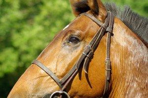 Calul maseur, noua senzaţie a Internetului (Video)