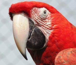 A aflat de la papagal că soţul are o amantă. Ce a făcut apoi femeia înșelată e de necrezut