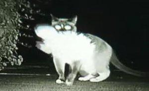 Ziua, pare o pisică normală. Ce face noaptea este incredibil. Descoperirea șocantă făcută de stăpânii felinei