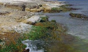 A ieșit la o plimbare pe malul Mării Negre și a făcut o descoperire tristă. Erau întinși pe plajă și nu mai respirau