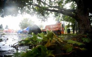 O femeie a murit la Brăila, după ce a fost lovită de un copac doborât de vânt